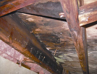 mold and rot in a Oakville crawl space