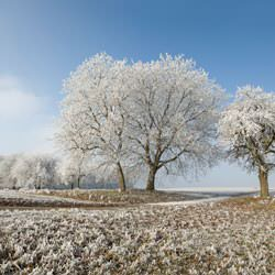 Frost covering trees and a grassy field in Jarvis, Hagersville, Caledonia, Cayuga, Dunnville, Port Colburne, Thorold