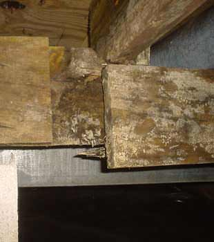 Extensive basement rot found in Burlington by Omni Basement Systems