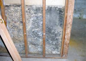 A mold-damaged wall section in a wet basement