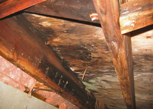 Extensive crawl space rot damage growing in Dunnville