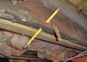 Destroyed crawl space structural wood in Port Colborne