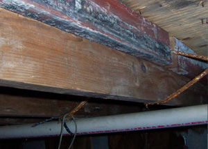Rotting, decaying wood from mold damage in New Hamburg